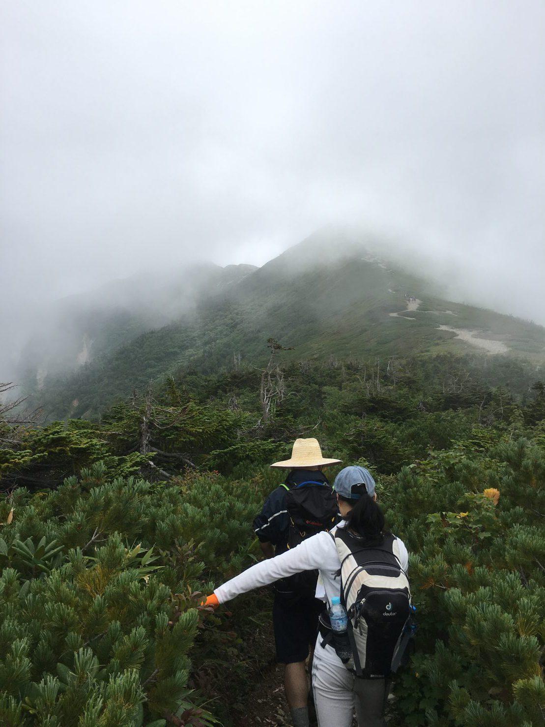 濃い霧の中、次第に頂上らしきものが