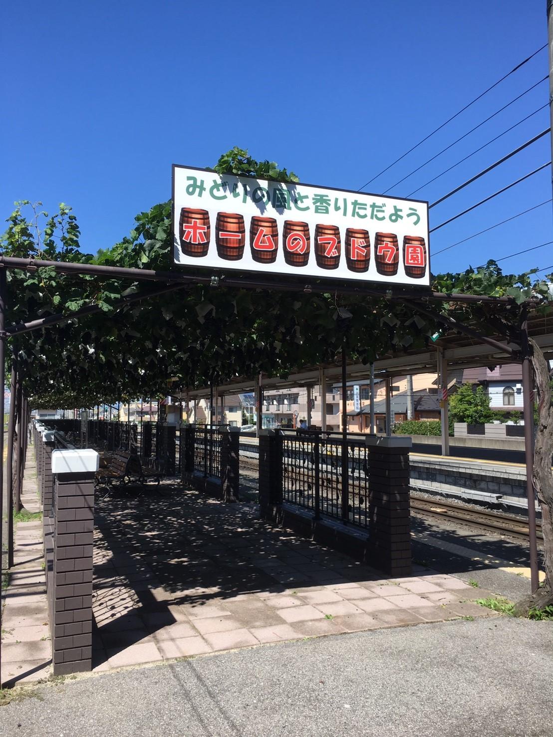 おまけ2 途中の塩尻駅には駅にぶどう園が